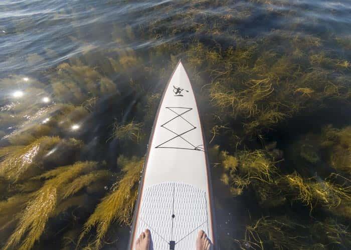 Torquay Paddle Boarding Race Board - Ocean Monkeys Paddle Boards